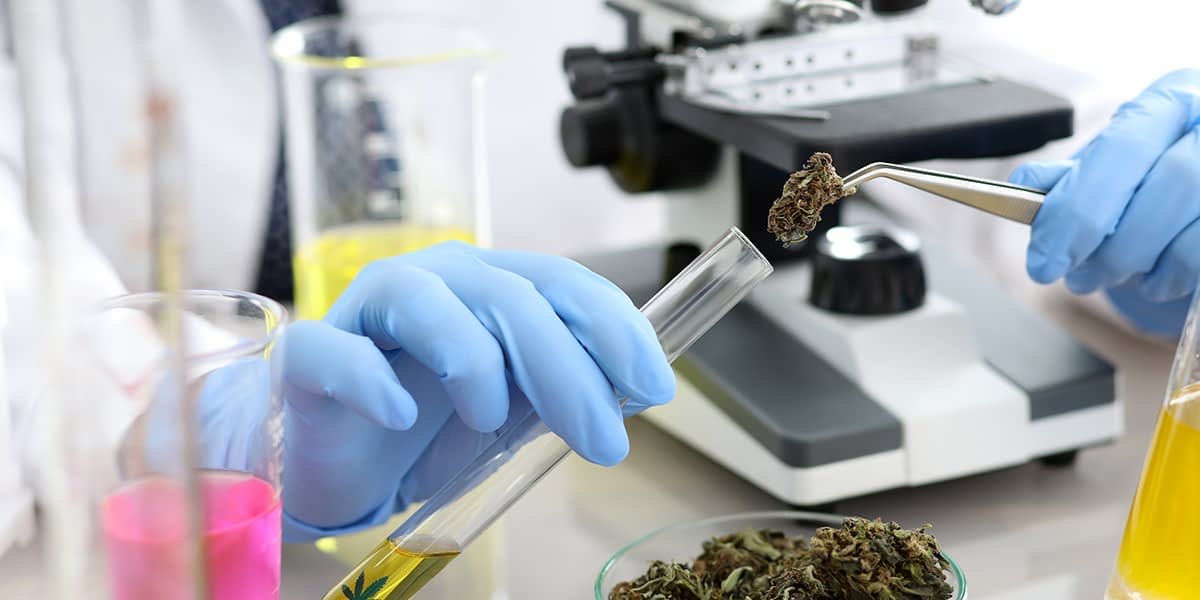 a doctor looking for a connection between marijuana and education