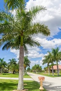 Beautiful drug and alcohol detox centers in Cape Coral FL